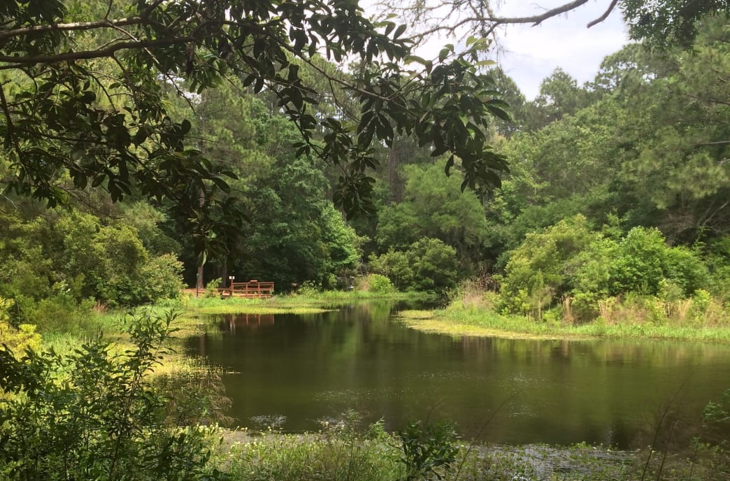 A quiet pond in the Audubon Newhall Preserve