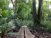 Image for Chuluota Wilderness Area Trail Running