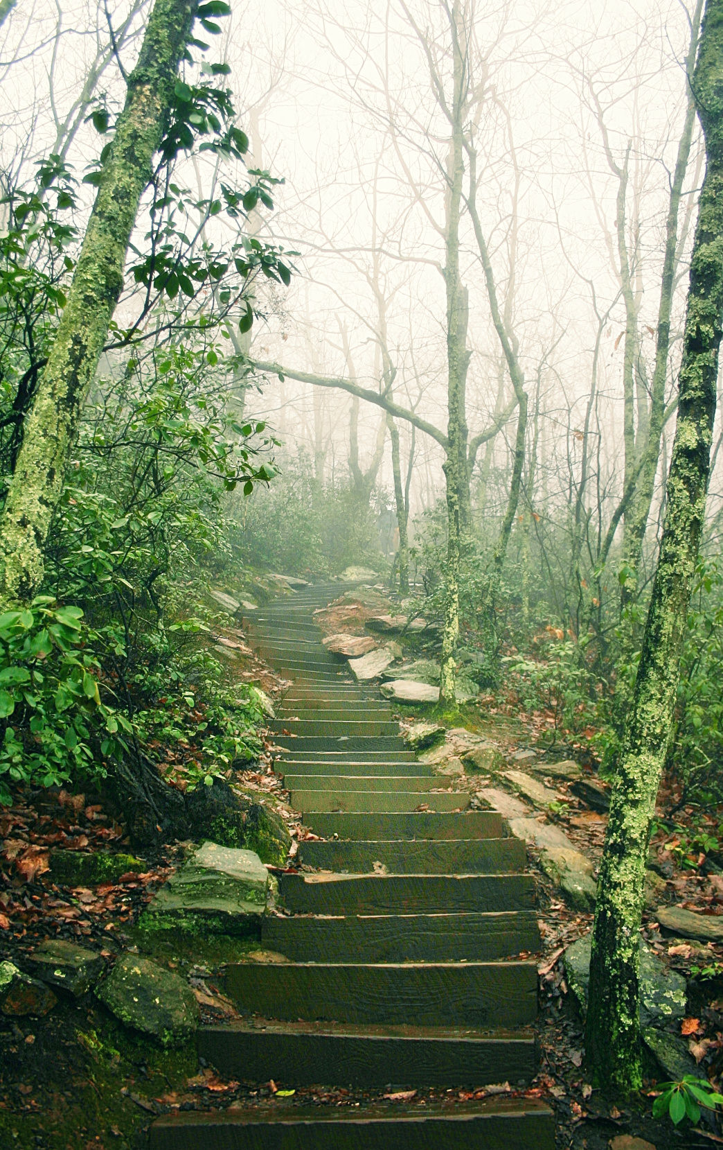 Catch the morning fog on the trails of Crowders Mountain in North Carolina for a unique running experience.
