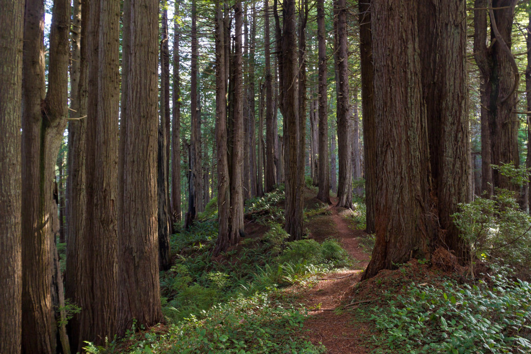 Sleep beneath the world's tallest trees.