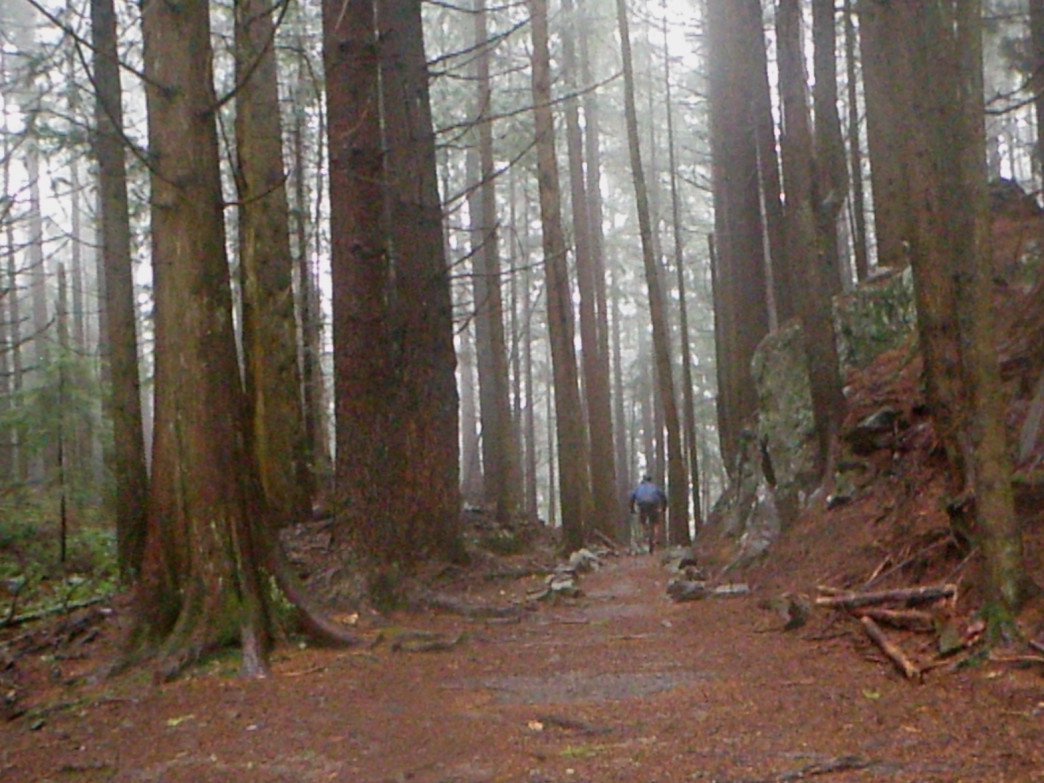 Gloomy winter days are no match for the Chuckanut Ridge Trail.