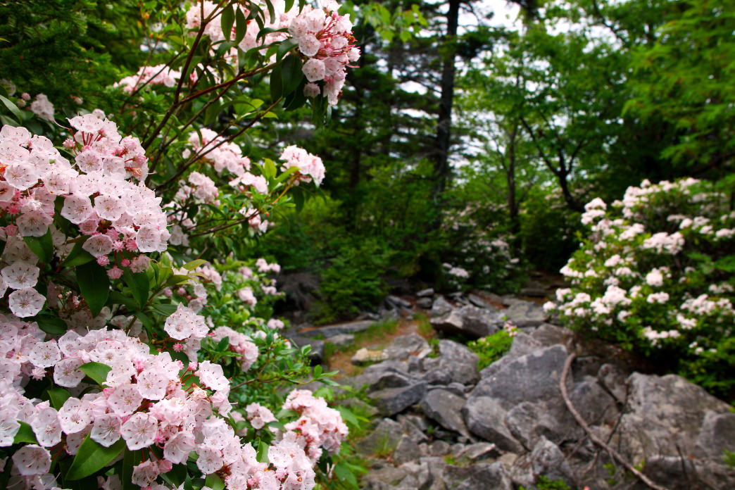 There is beauty all around at Dolly Sods.
