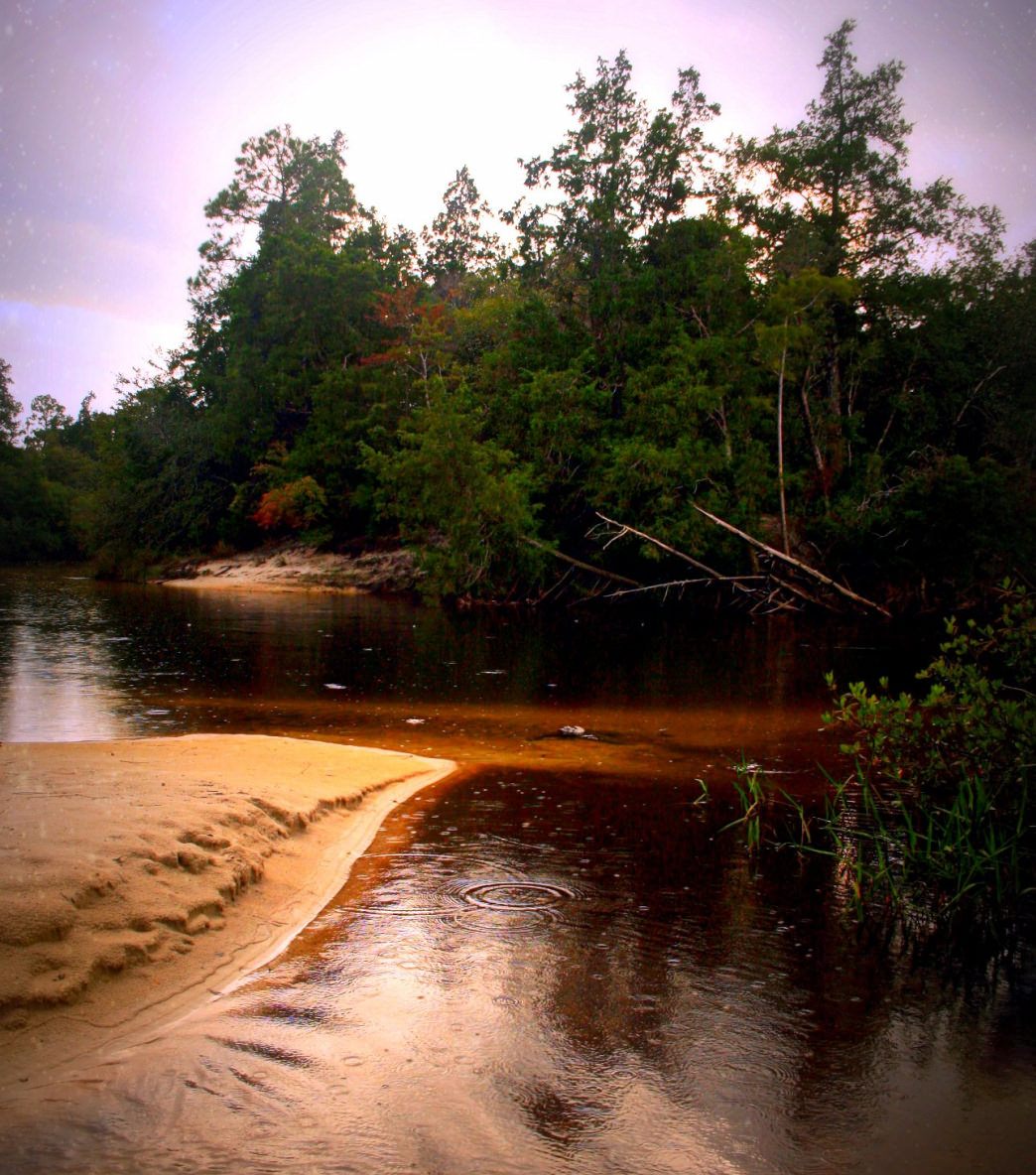 The Blackwater River winds through cypress swamps and pine forests on its route to the Gulf of Mexico.