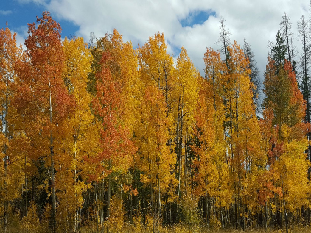 Fall is aspen season.