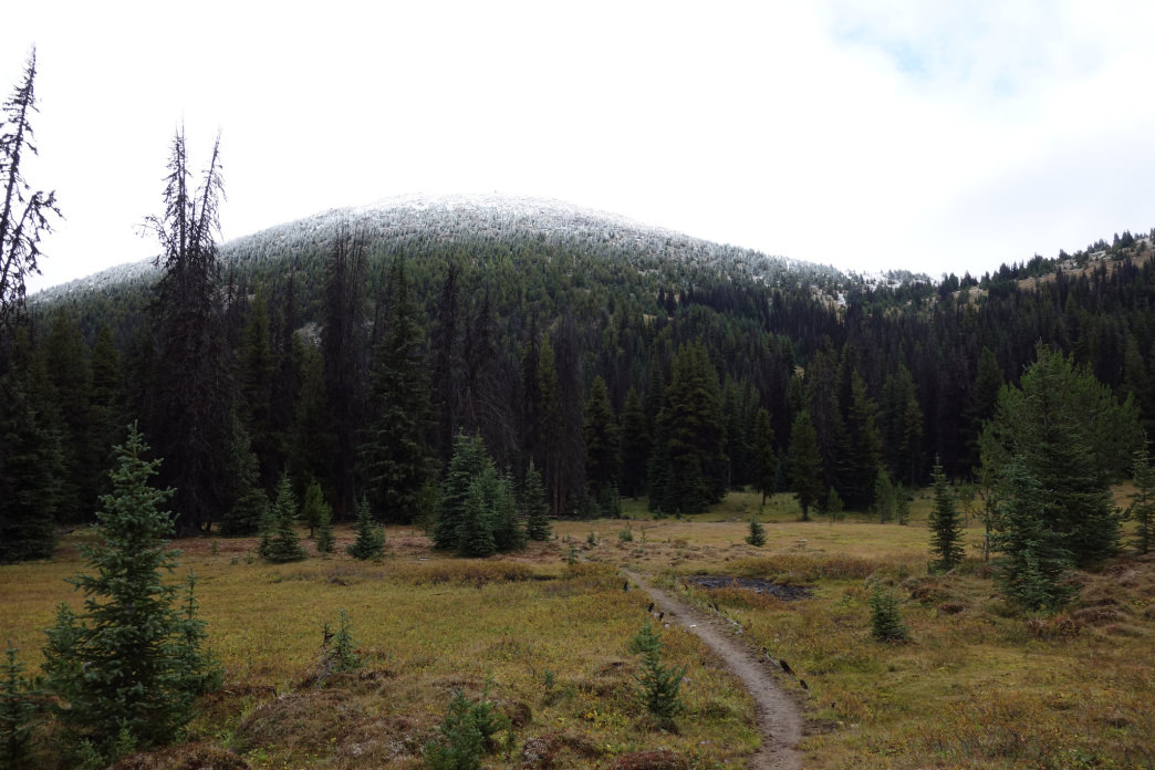 The snow line visible above the trees along the Boundary Trail.     Laura Lancaster