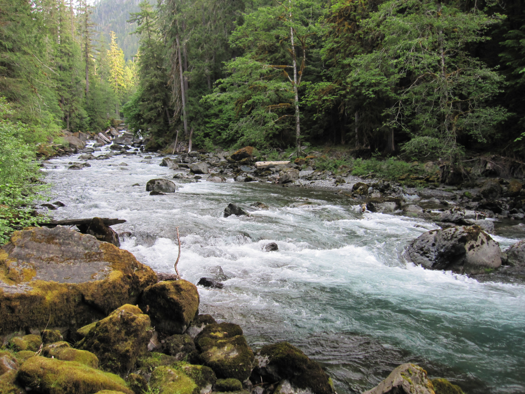 North Fork Skokomish River