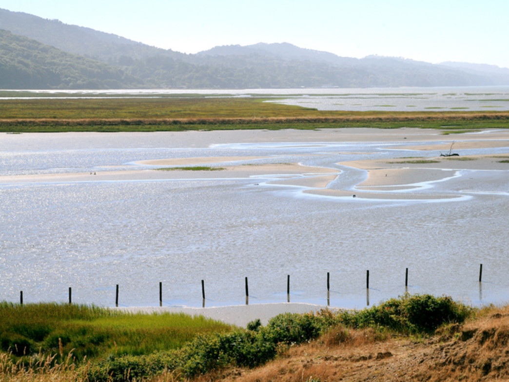 Trail Mavens offers paddling trips to Tomales Bay in Northern California.