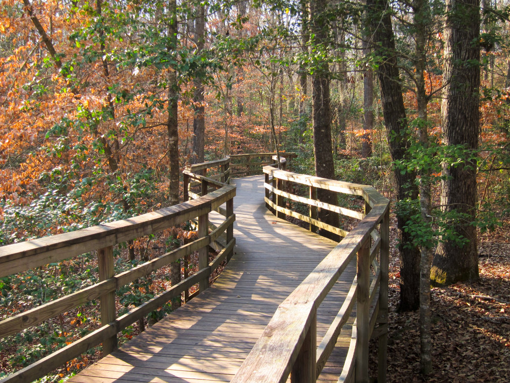 The boardwalk at the Congaree National Park visitor's center, South Carolina.