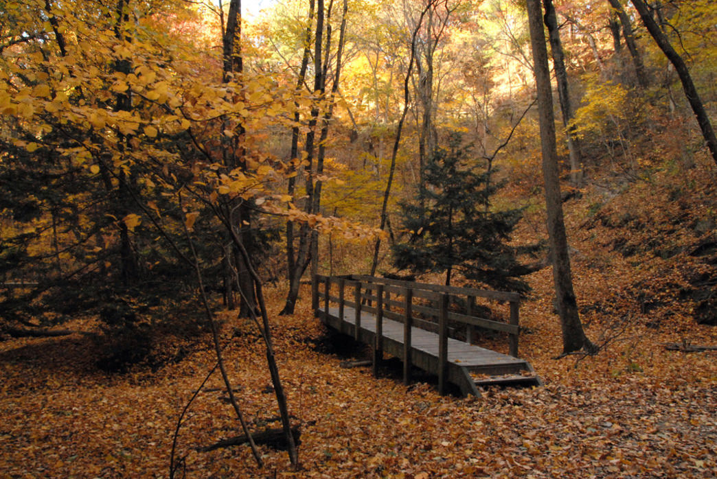 You'll find plenty of fall colors at Starved Rock State Park.