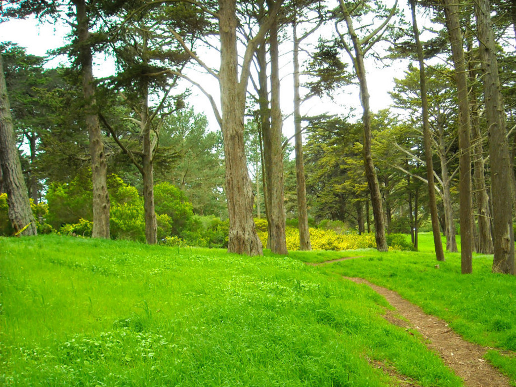 Take your pick of trails in Golden Gate Park.