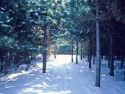 Image for Kettle Moraine State Forest - Southern Unit - Skiing