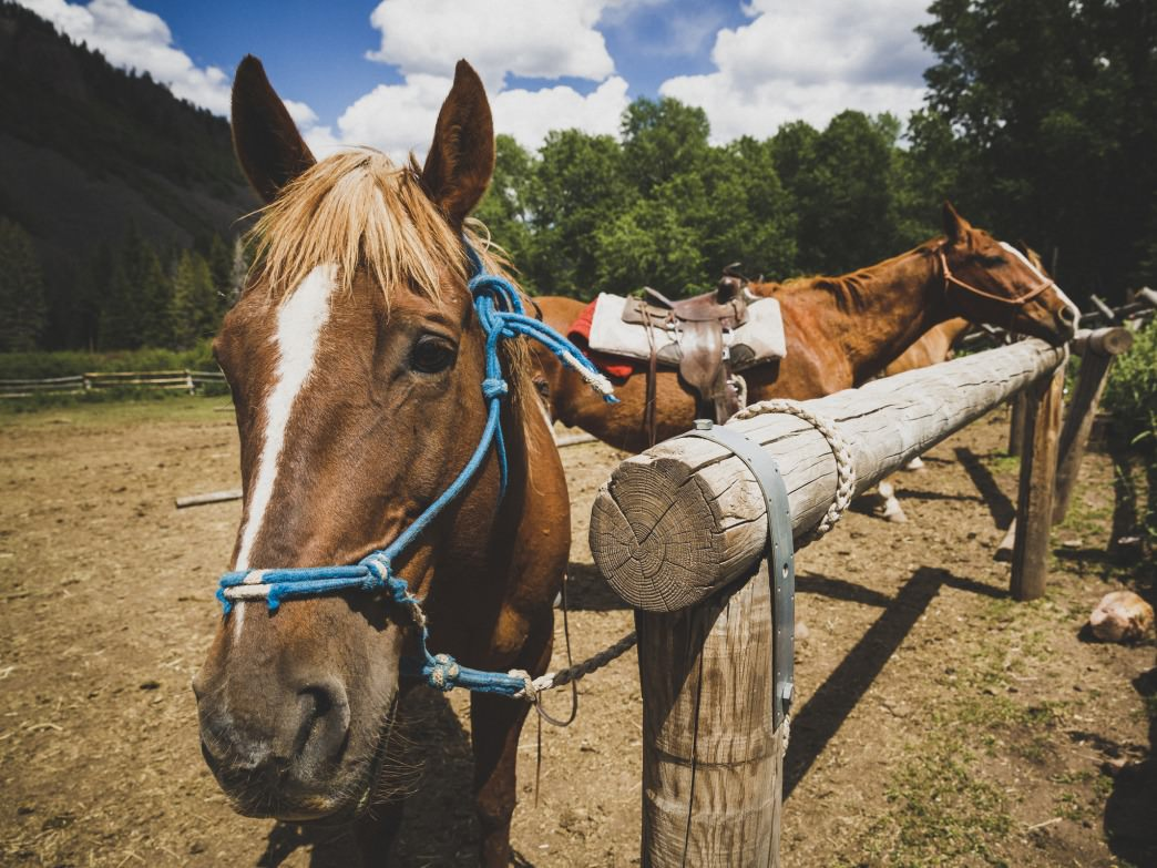 Trail horses at YMCA Camp Roger in the Wasatch-Cache National Forest, Utah.