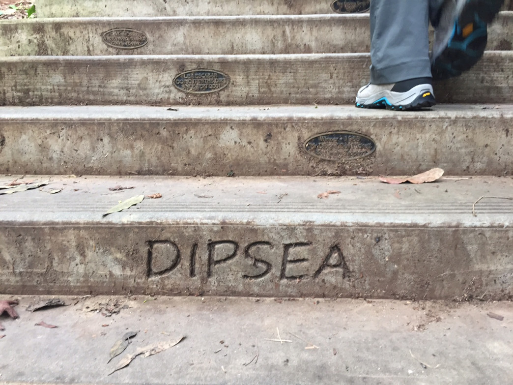 Hundreds of steps make for an unforgettable start of the Dipsea Trail in Mill Valley.