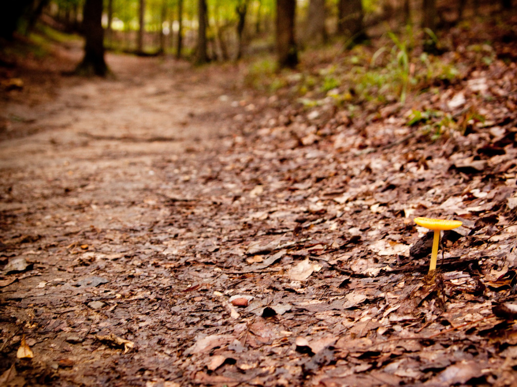 Oak Mountain State Park has endless trails and gorgeous views.