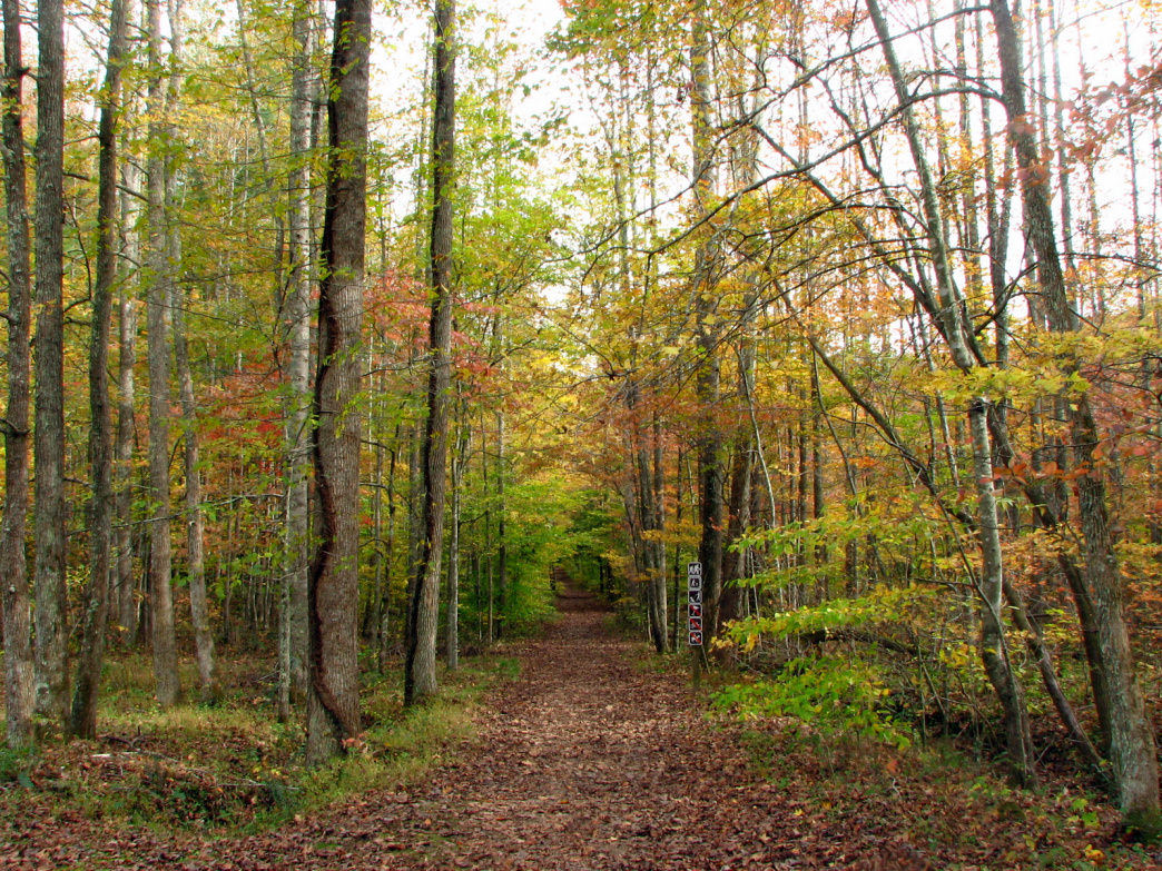 The Old Mac Hiking Trail is especially beautiful in the fall.