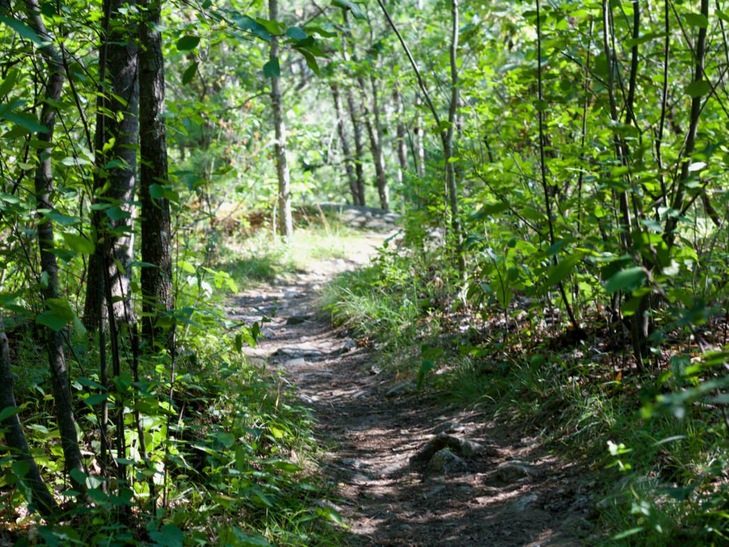 middlesex fells map trail