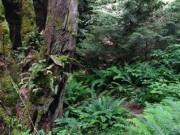 Image for Salal Trail