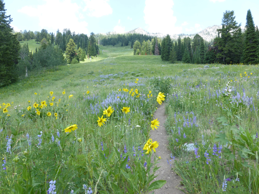 The aptly-named Wildflower Trail is packed with flowers (blooms peak mid-summer).