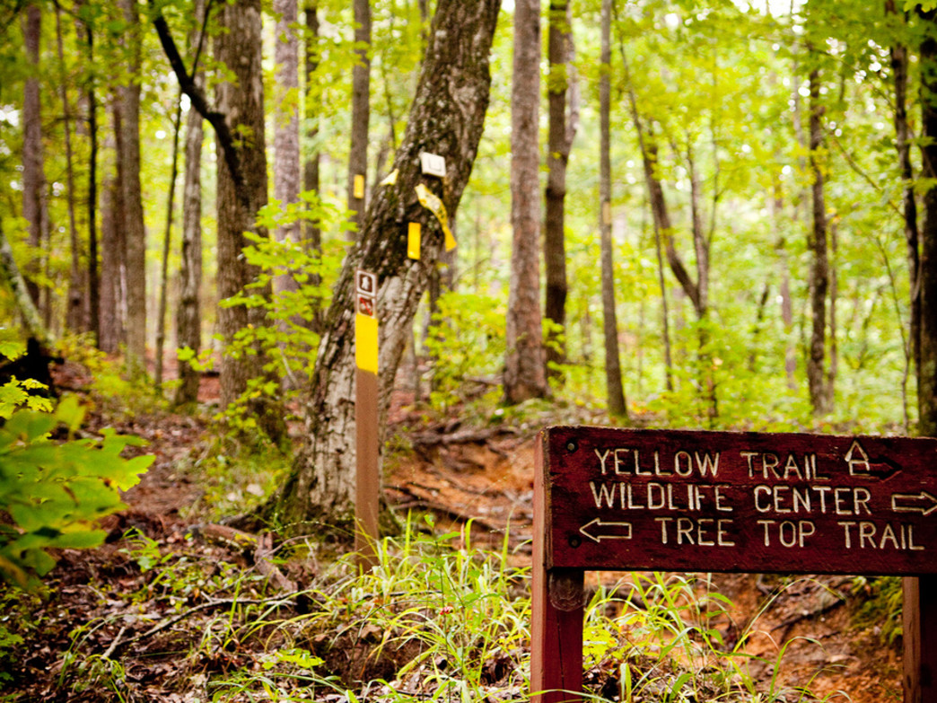 Plenty of trails to choose from at Alabama's largest state park