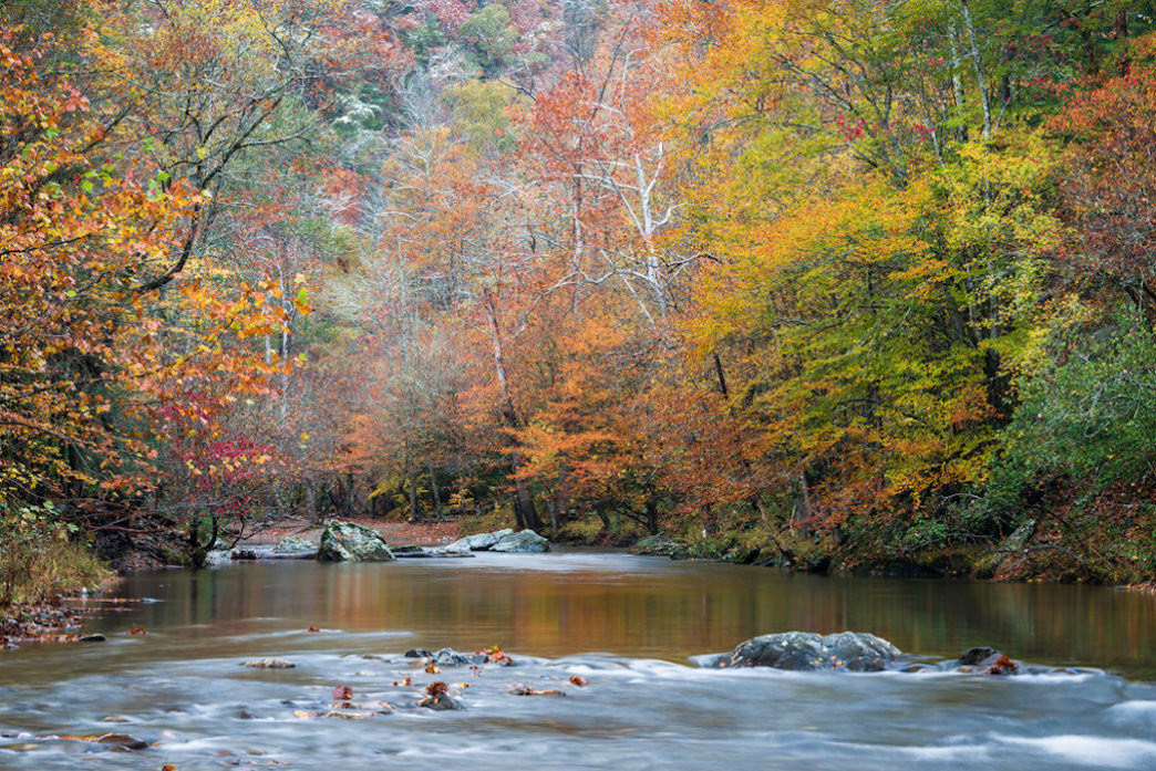 The Little River is the most popular spot to fish in the Smokies.