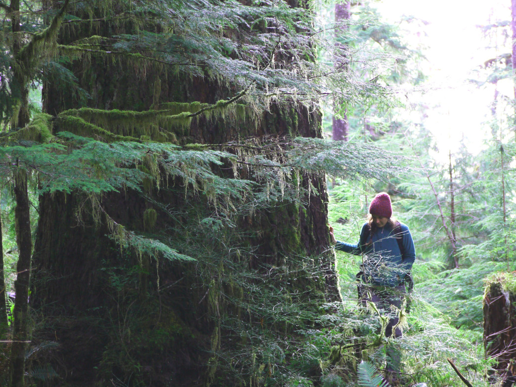 Old growth forest, like the ones found in Wild Sky Wilderness, are a natural wonder.