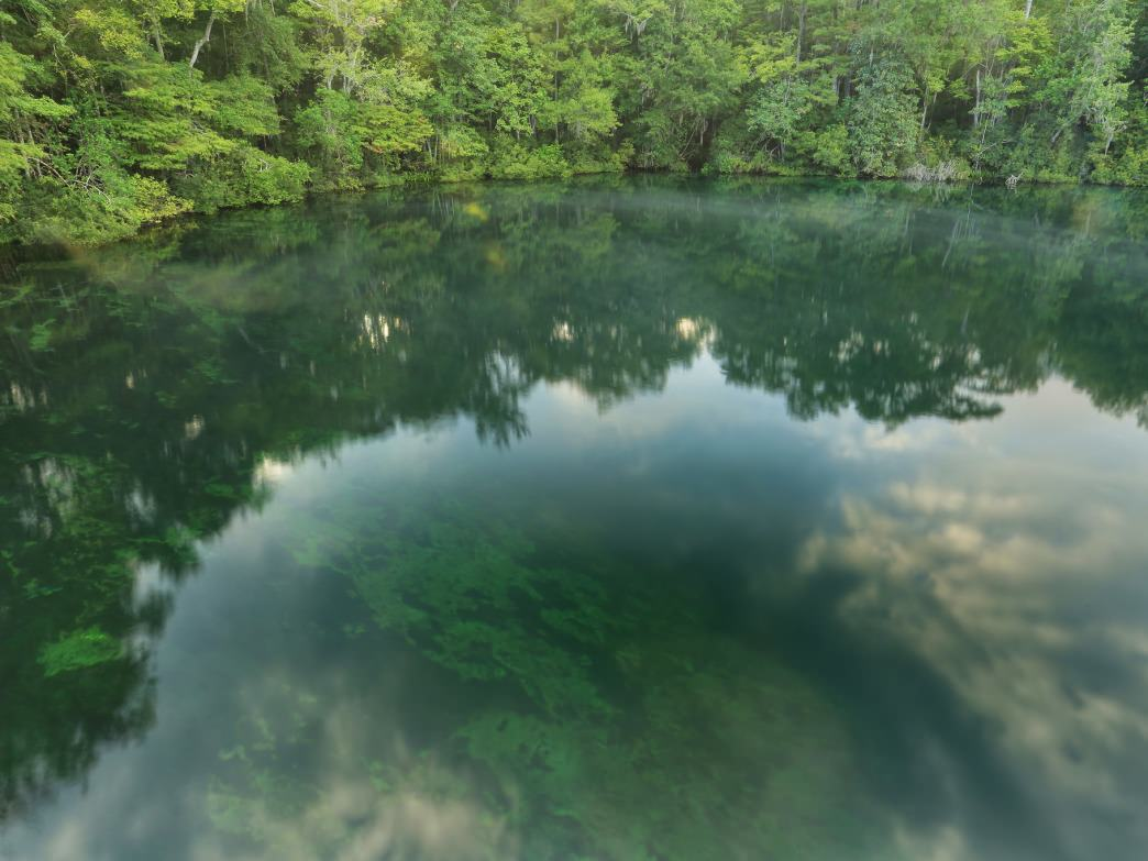 Wakulla Springs State Park features one of the largest and deepest freshwater springs in the world