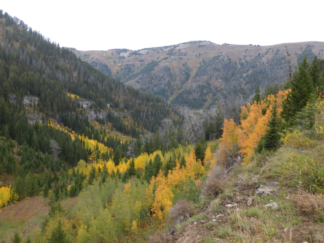Fall foliage lights up Darby Canyon on the hike out to the Wind Cave.