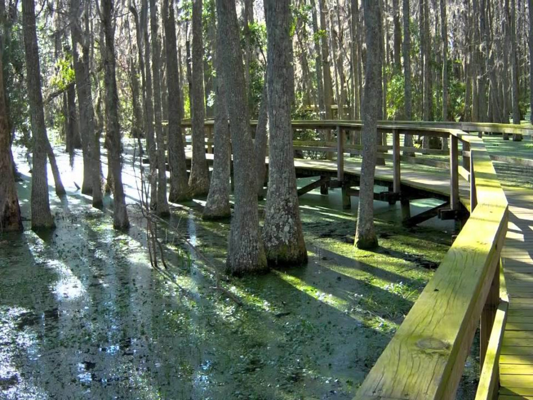 Whooping Crane Conservancy in Hilton Head Plantation