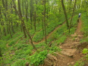 Image for Mountains-to-Sea Trail: Buck Springs to French Broad