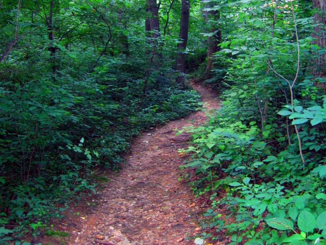 Glover-Archbold Park urban forest and running trail.