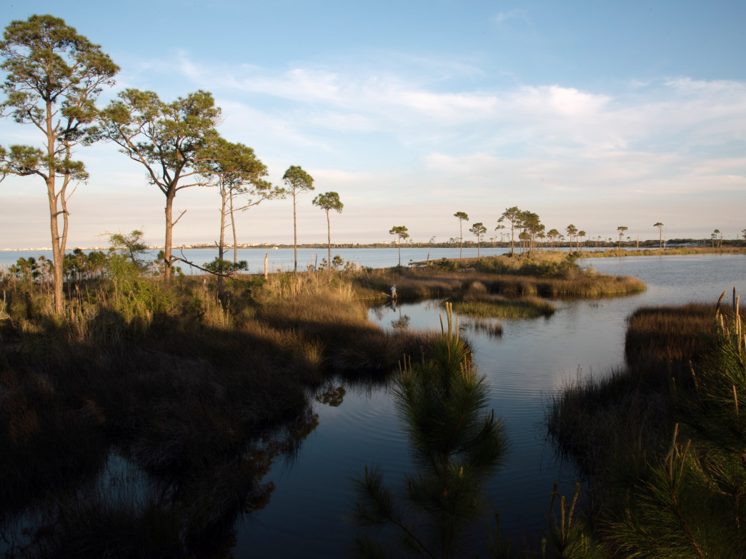 Visit one of Alabama's coastal NWR Bon Secour National Wildlife Refuge.