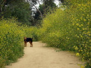 Image for Elysian Park- Wildflower Trail