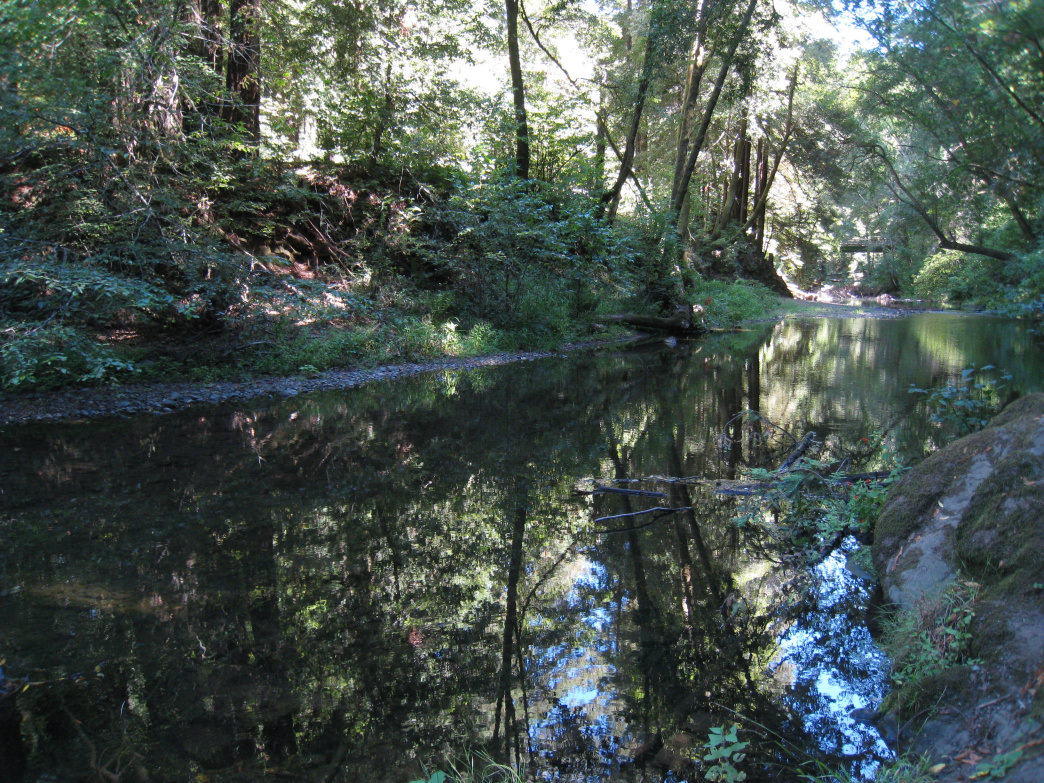 The water from Lagunitas Creek fills the Inkwells.