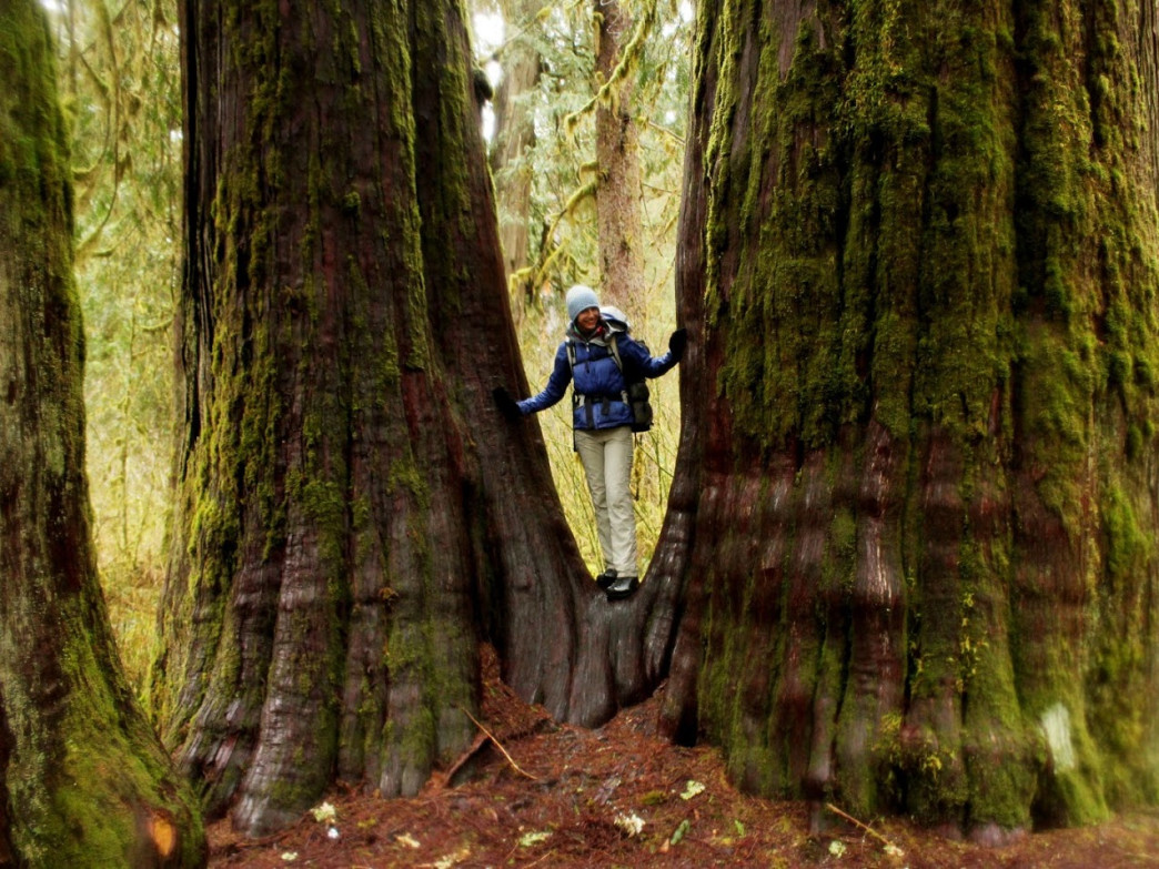 The size of the trees along the trail will keep you in awe the whole way.