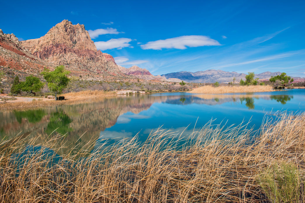 A desert oasis in Spring Mountain Ranch State Park.
