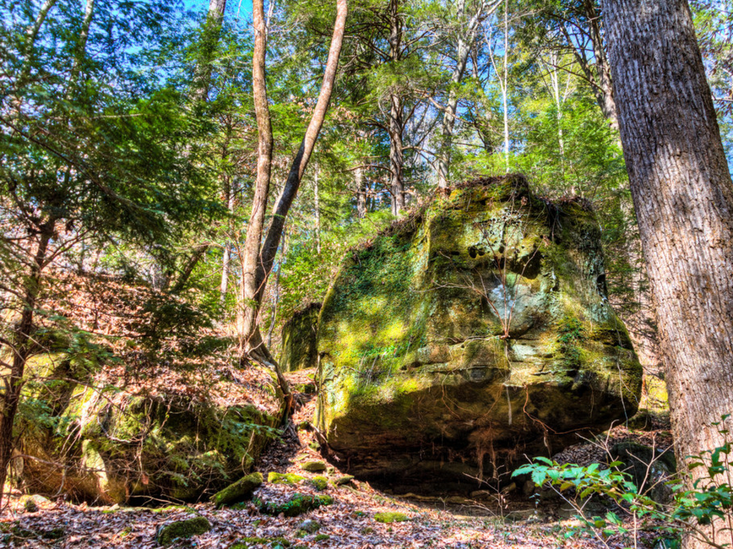 The forest is full of interesting rock formations.
