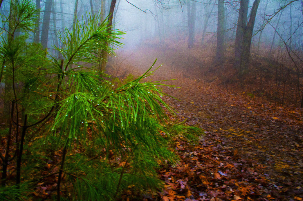 A misty morning in South Mountain State Park.