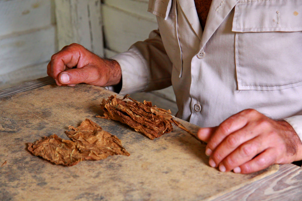 Hand-rolling a traditional Cuban cigar.