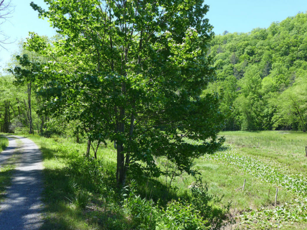 Greenbrier River Trail