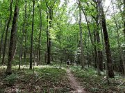 20170620_Tennessee_Chattanooga_Pot House Trail_Hiking3