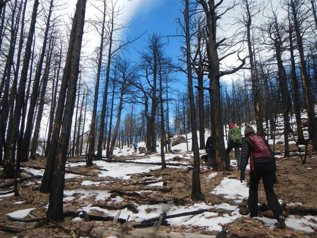 Hiking through the burn zone on the way up to South Boulder Peak