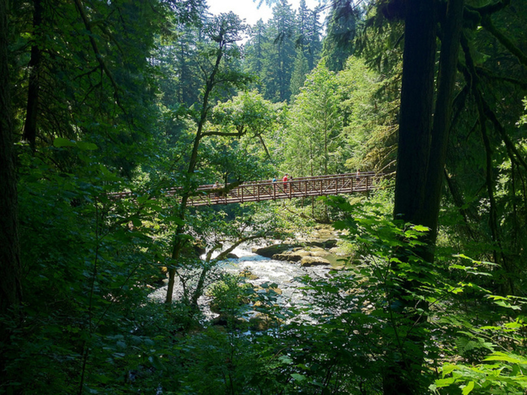 Lacamas Park offers easy hiking and trail running in the midst of a beautiful forest.