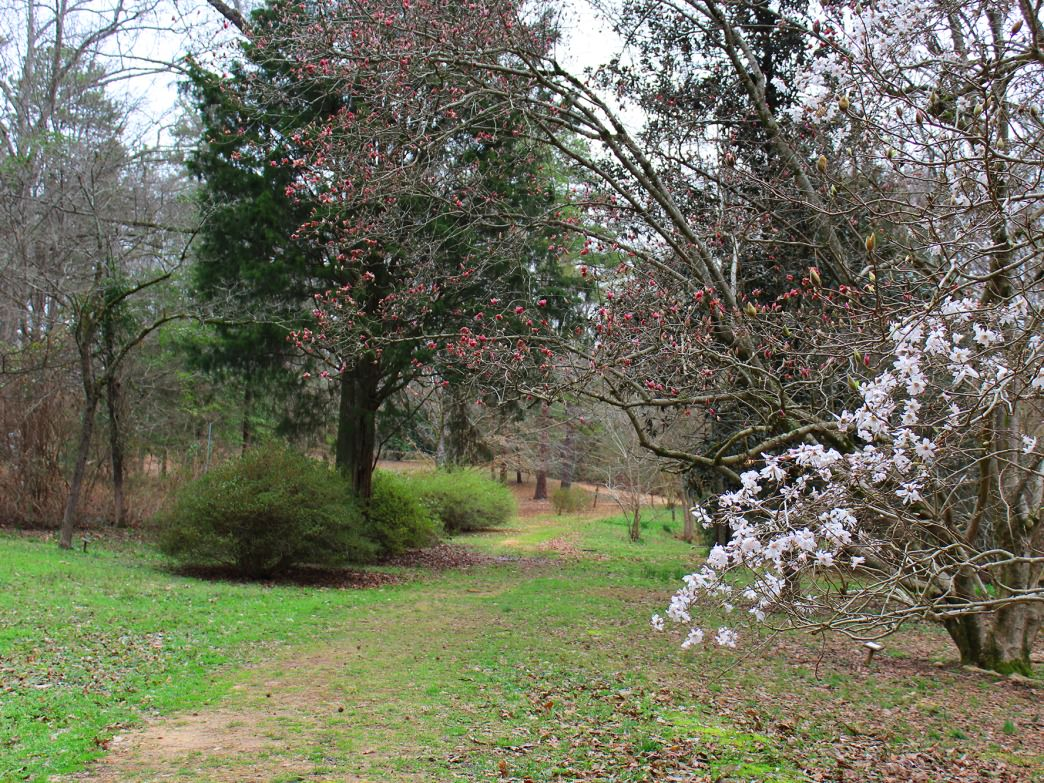 The University of Alabama Arboretum