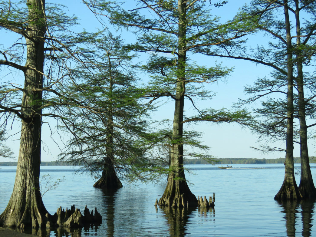 The park's piers, along with the Visitor Center Boardwalk, get hikers out onto the lake for excellent views of the flooded cypress forest.