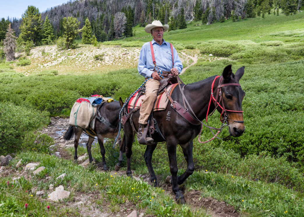 Horsepacking is an excellent way to get into the high country and more remote mountain areas without having to do it all on your own two feet.