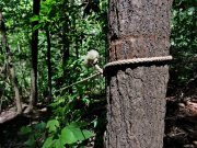20170607_Tennessee_Chattanooga_Julia Falls Overlook_Hiking8