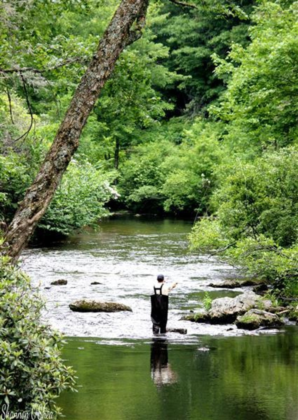 Cullasaja river fly fishing for Nc fishing license cost