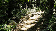 Image for Herb Parsons Lake trail