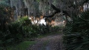 Image for Spanish Moss Trail