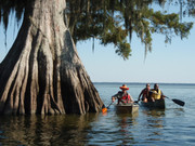 Image for Virgin Cypress of Lake Fausse Point